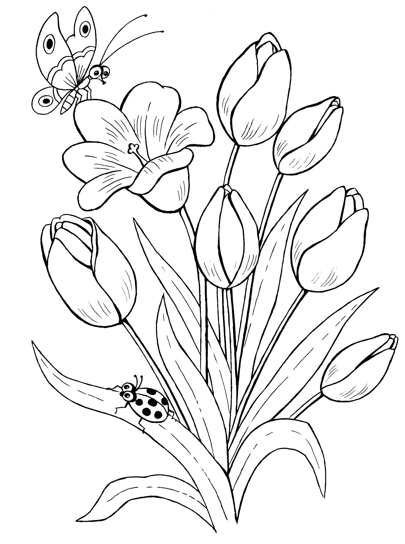 Рисунки цветов карандашом на открытку том, хорошо