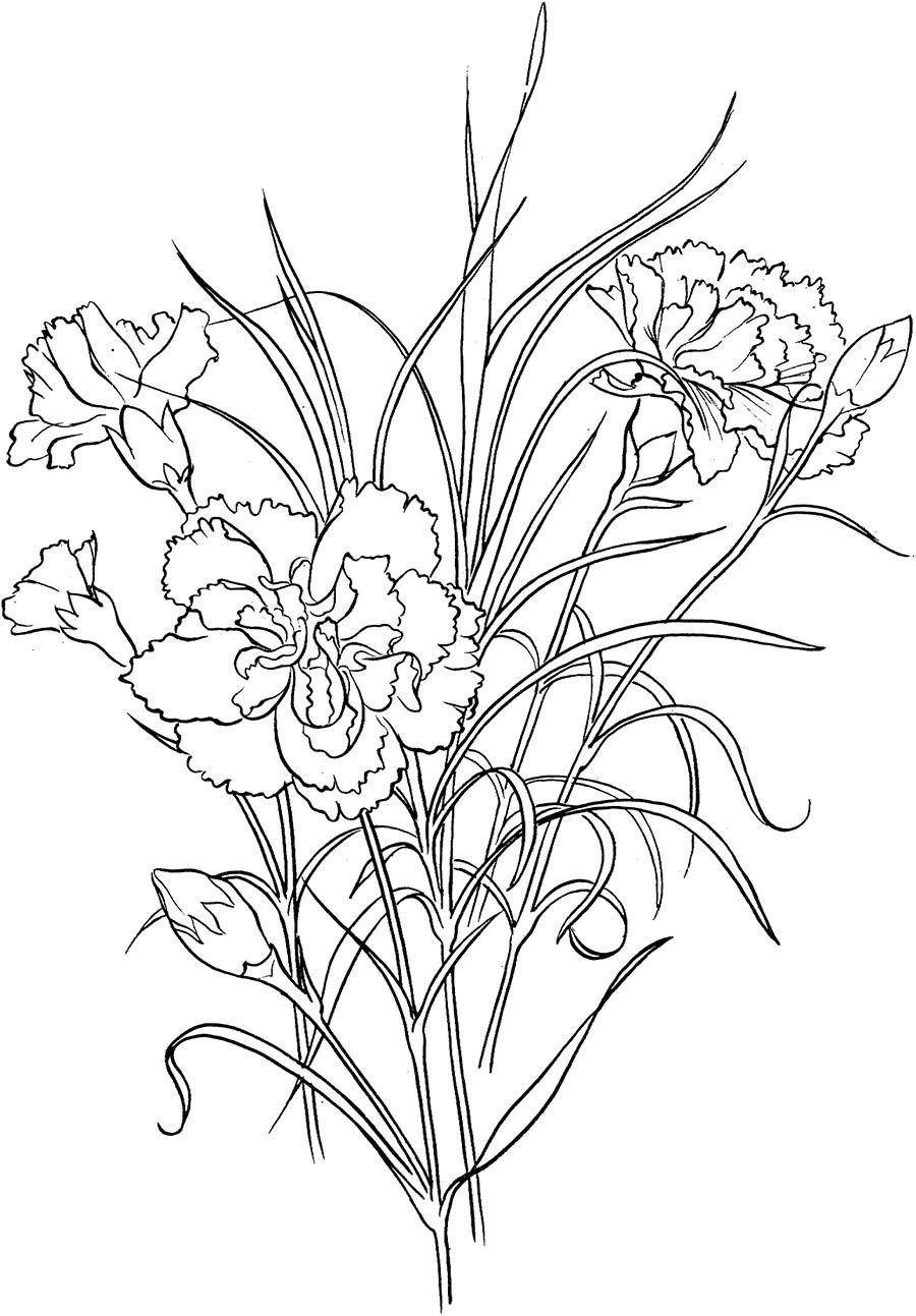 цветы гвоздика картинка раскраска нас всегда