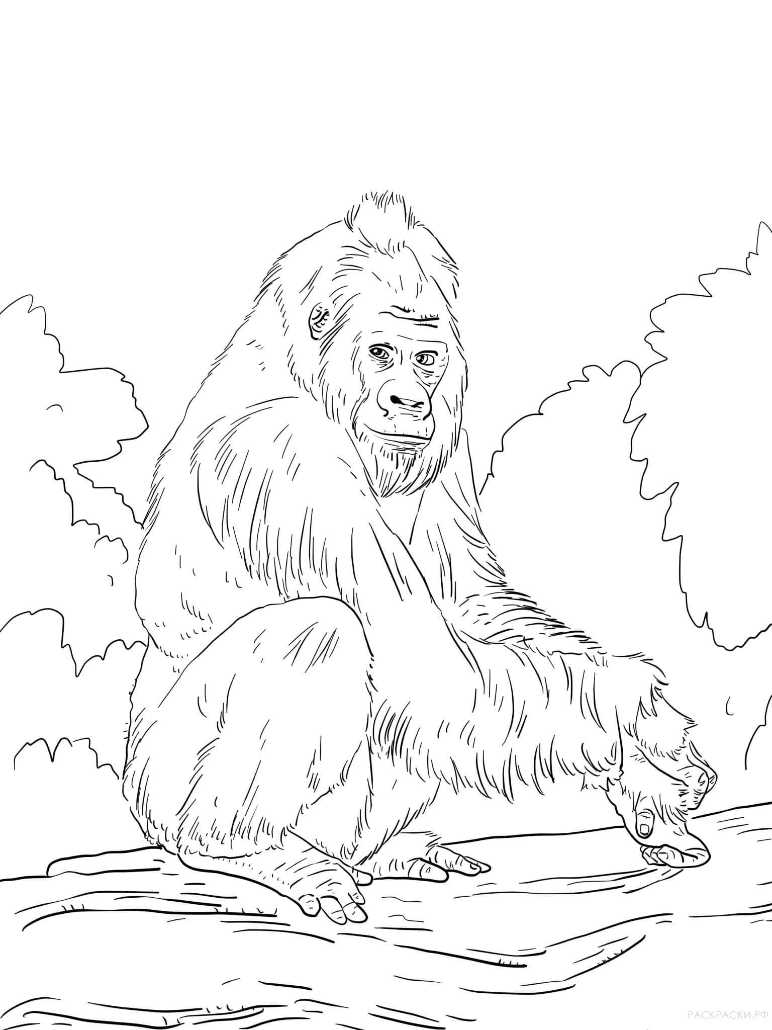 раскраски горилла детские раскраски распечатать бесплатно