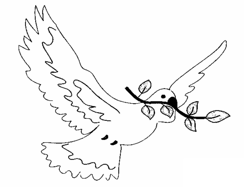Скачать голубей картинки