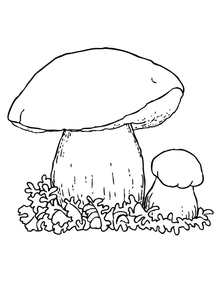 картинка раскраска для детей грибы