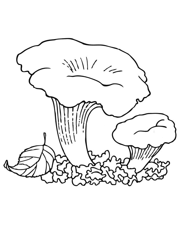 Раскраски для детей грибы- детские раскраски распечатать ...