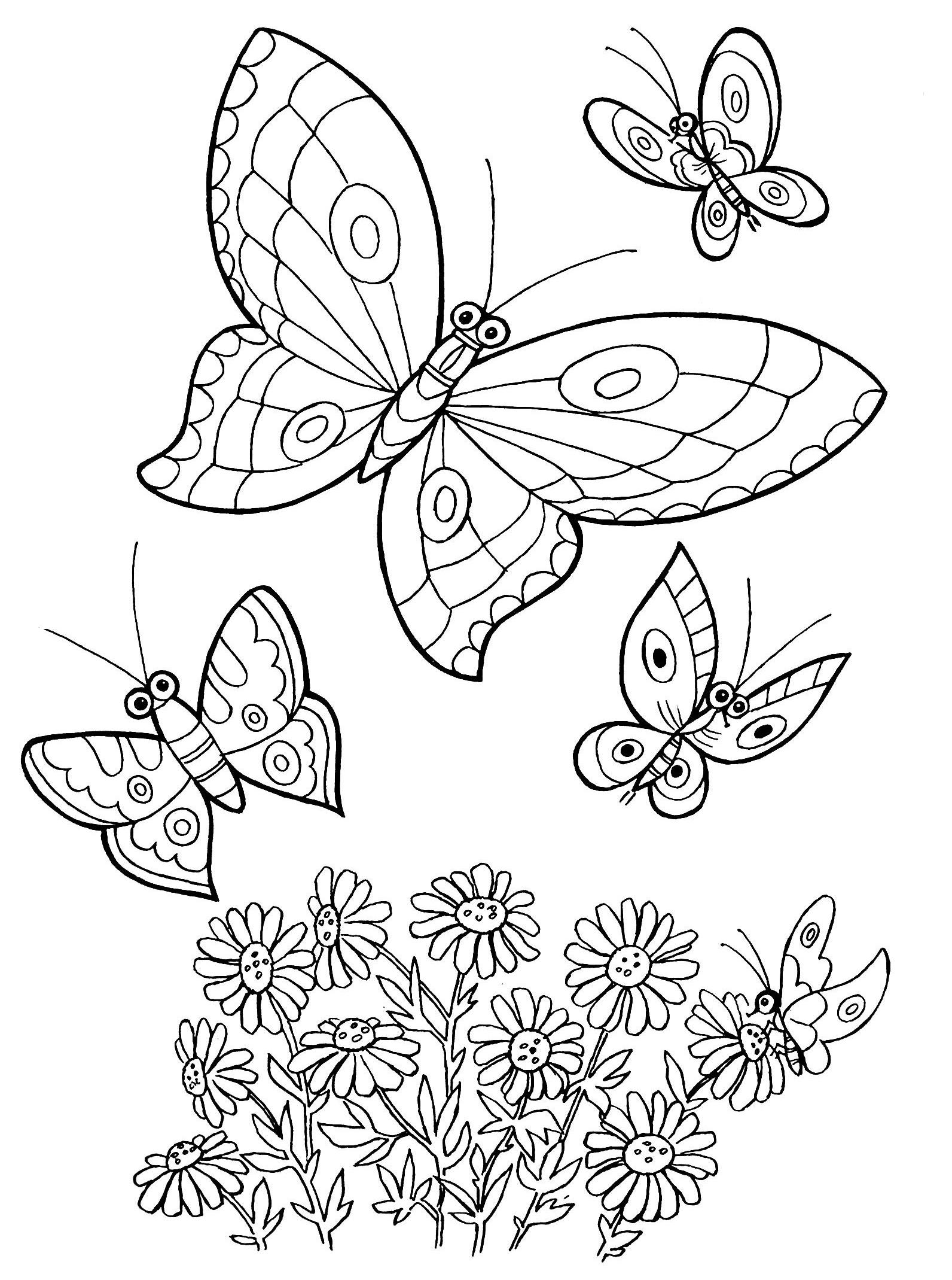 Раскраски бабочки на цветах