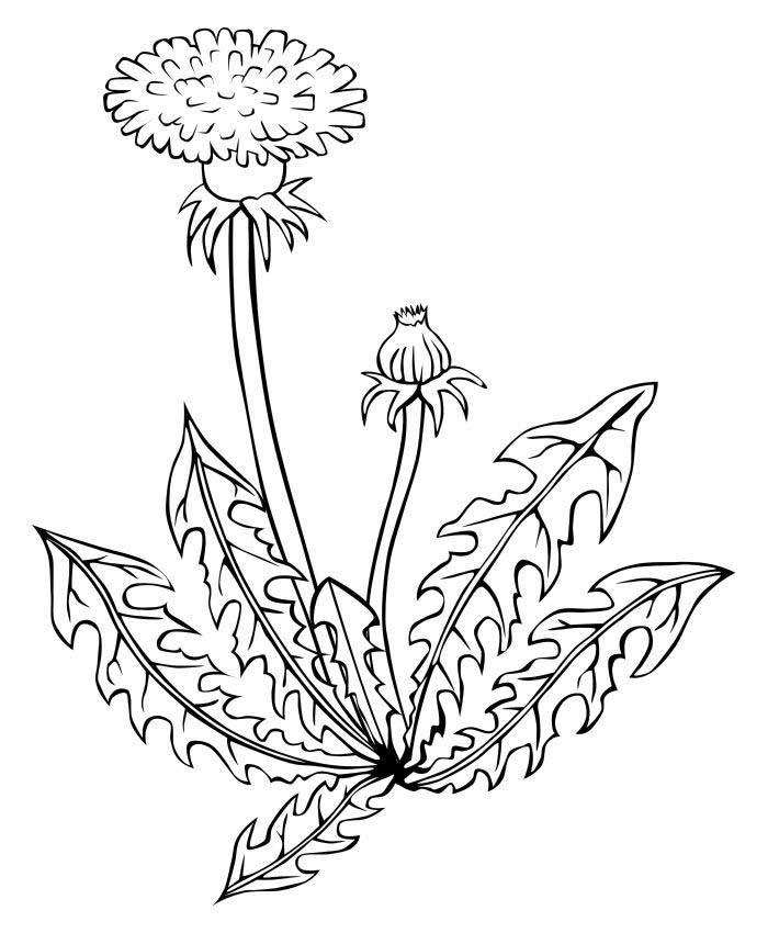 посоветуем, какие рисунок о растениях детям полотна