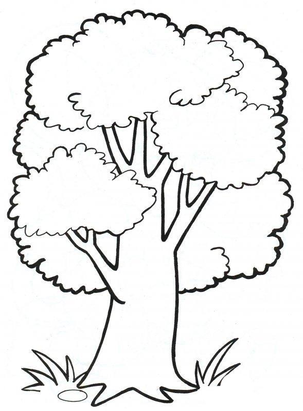 Раскраска Деревья - детские раскраски распечатать бесплатно