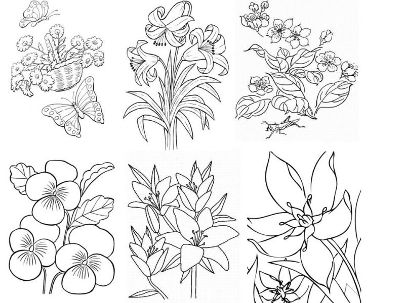 Раскраска декоративные цветы