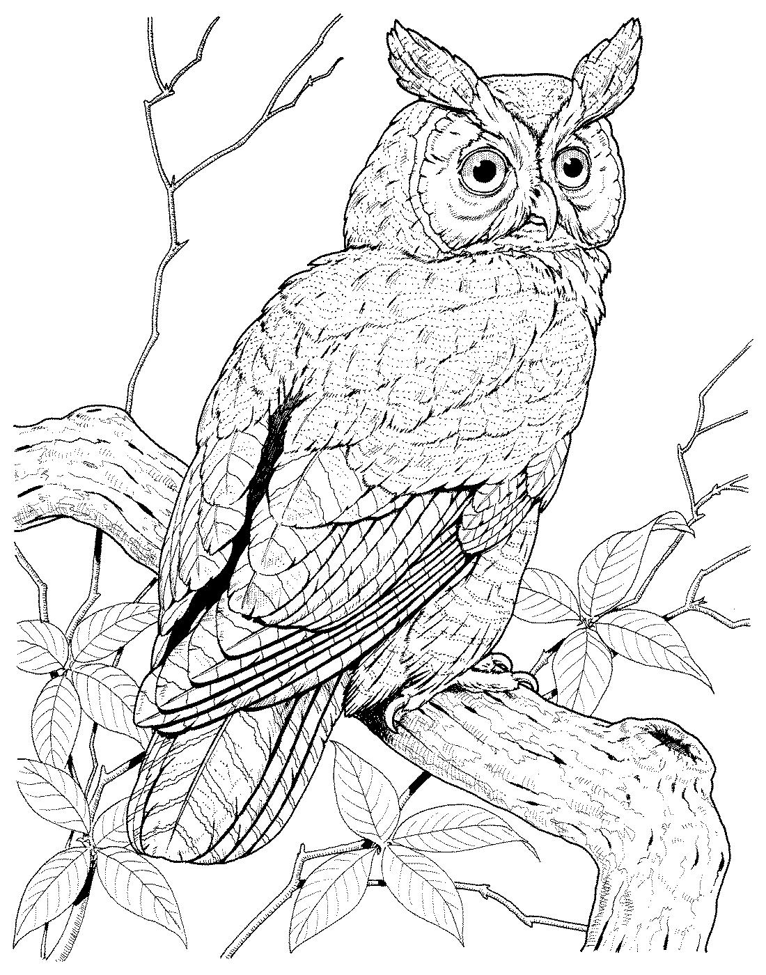 раскраска филин сова душистая весною расцвела