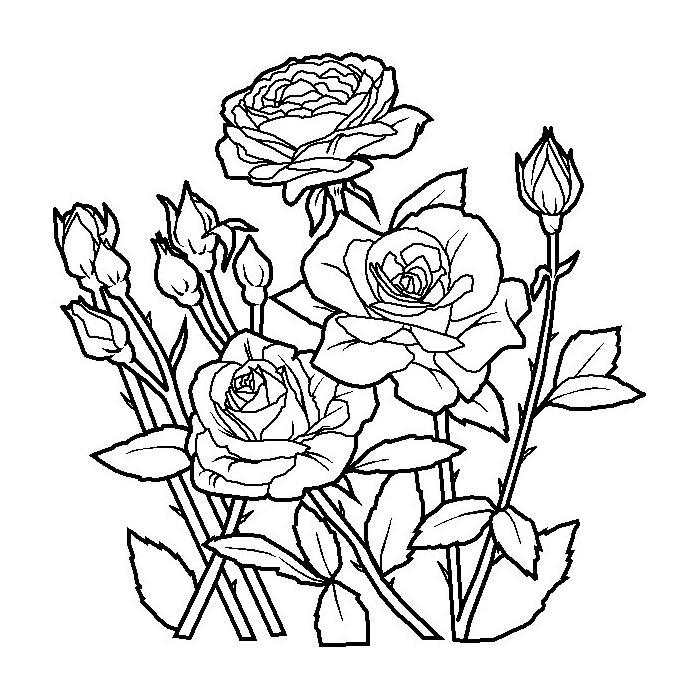 Картинки смешные, раскраска роза для открыток