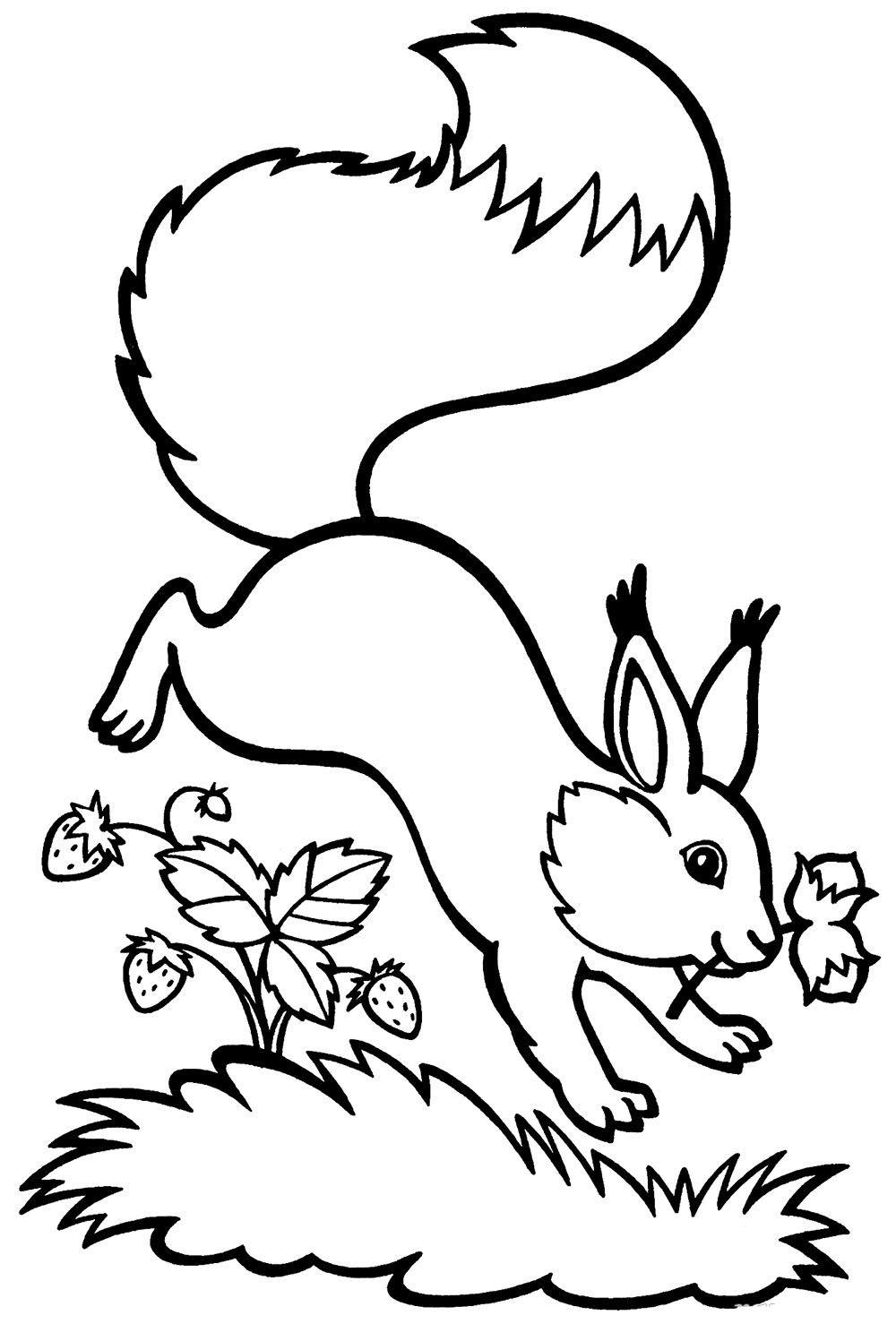 Раскраска Белка - детские раскраски распечатать бесплатно