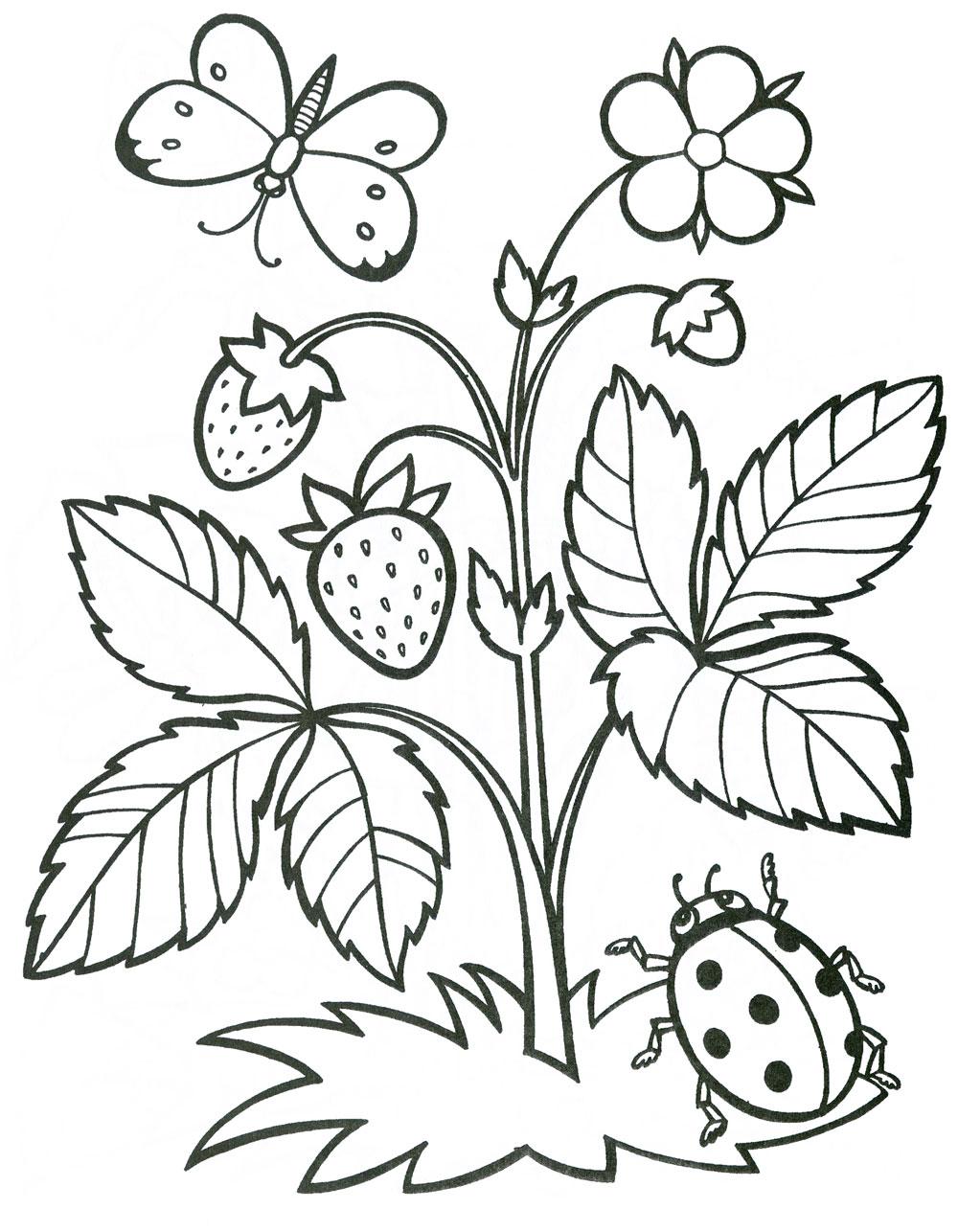 Раскраска ягоды - 7
