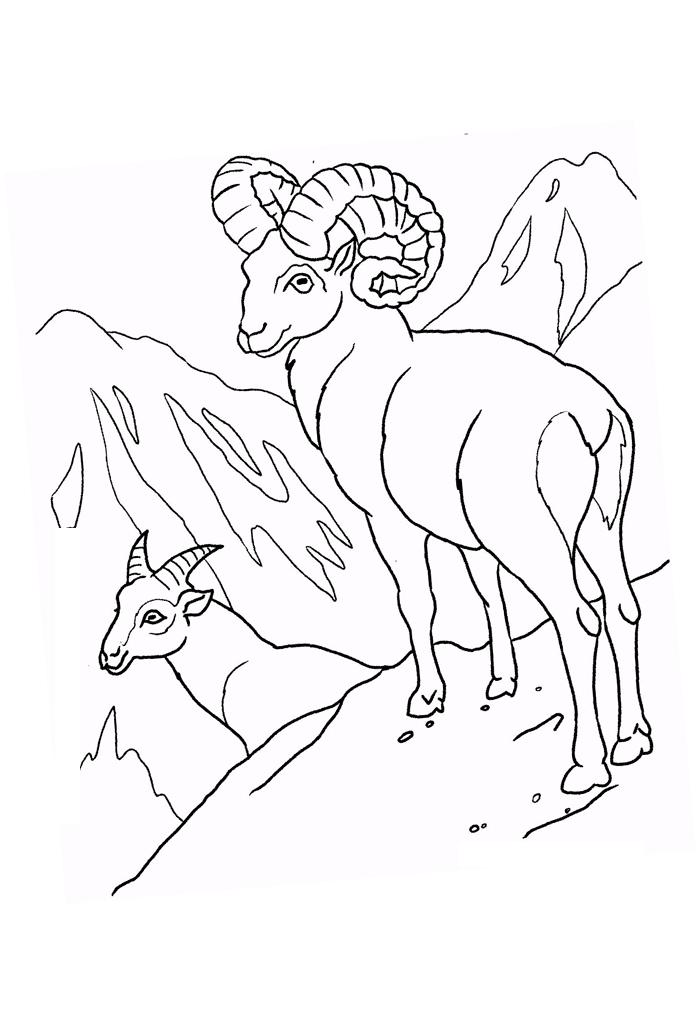 Рисунки баран на горе