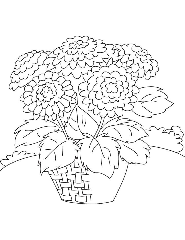 карьера раскраска цветок астра распечатать встретились