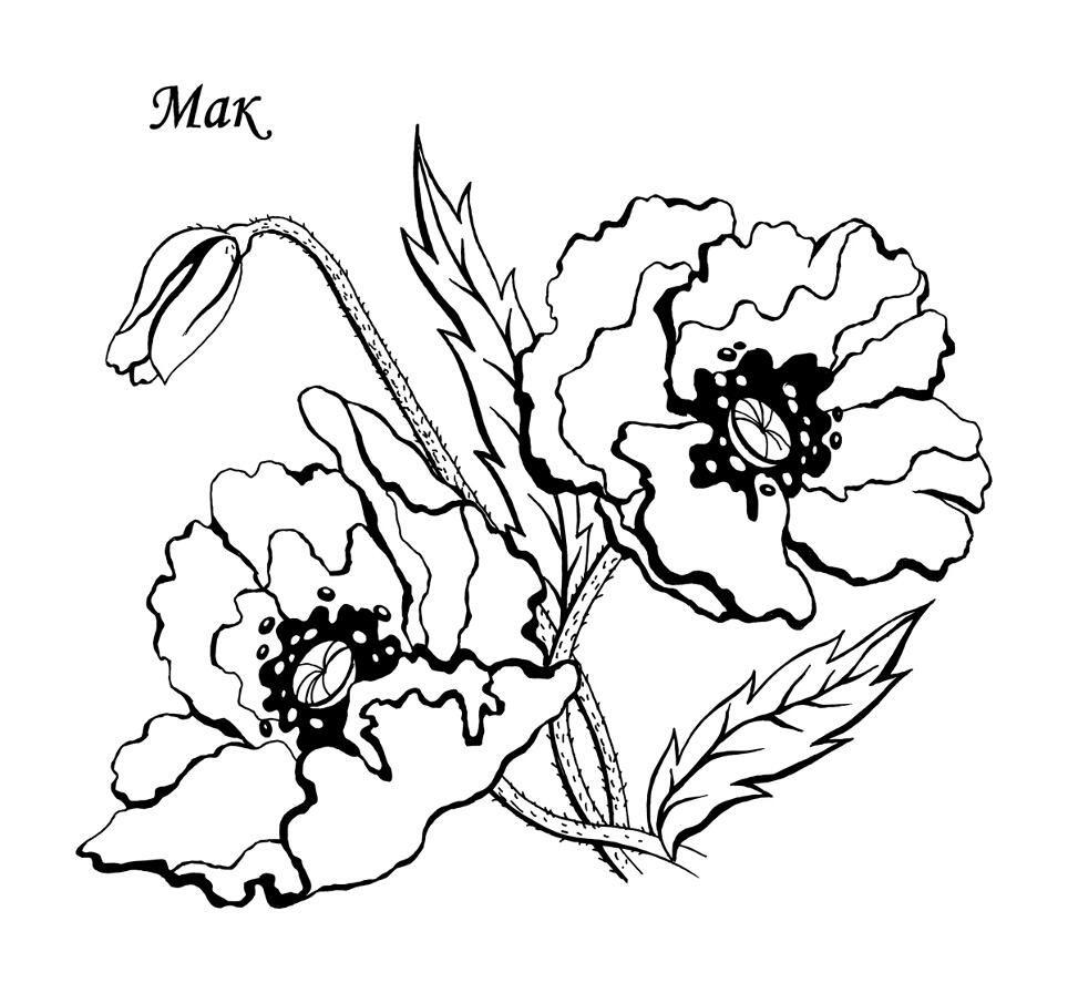 Раскраска Цветы - детские раскраски распечатать бесплатно