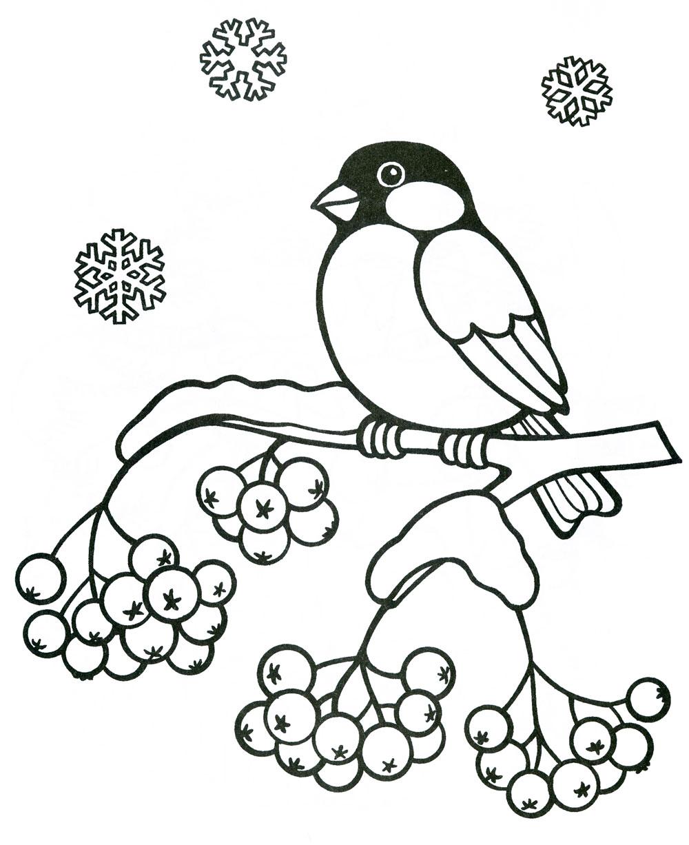 что картинки карандашом птицы зимой прожарить