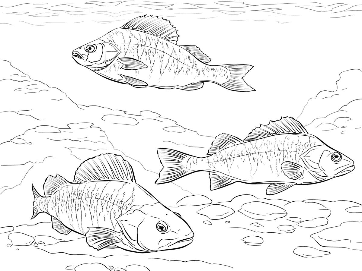 Сахком фотоотчеты рыбалка охота