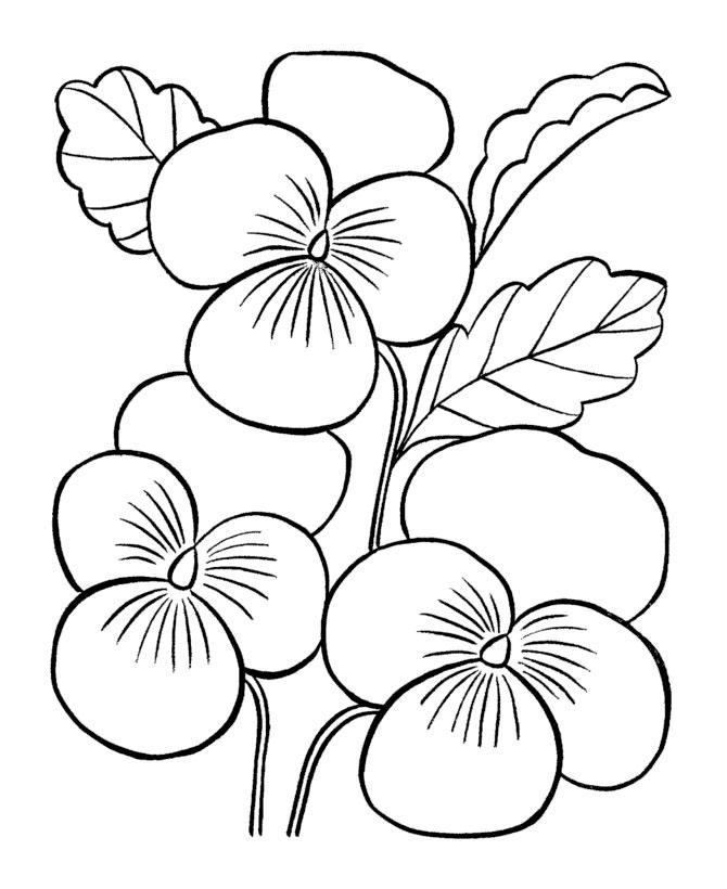 Цветы крупные раскраска