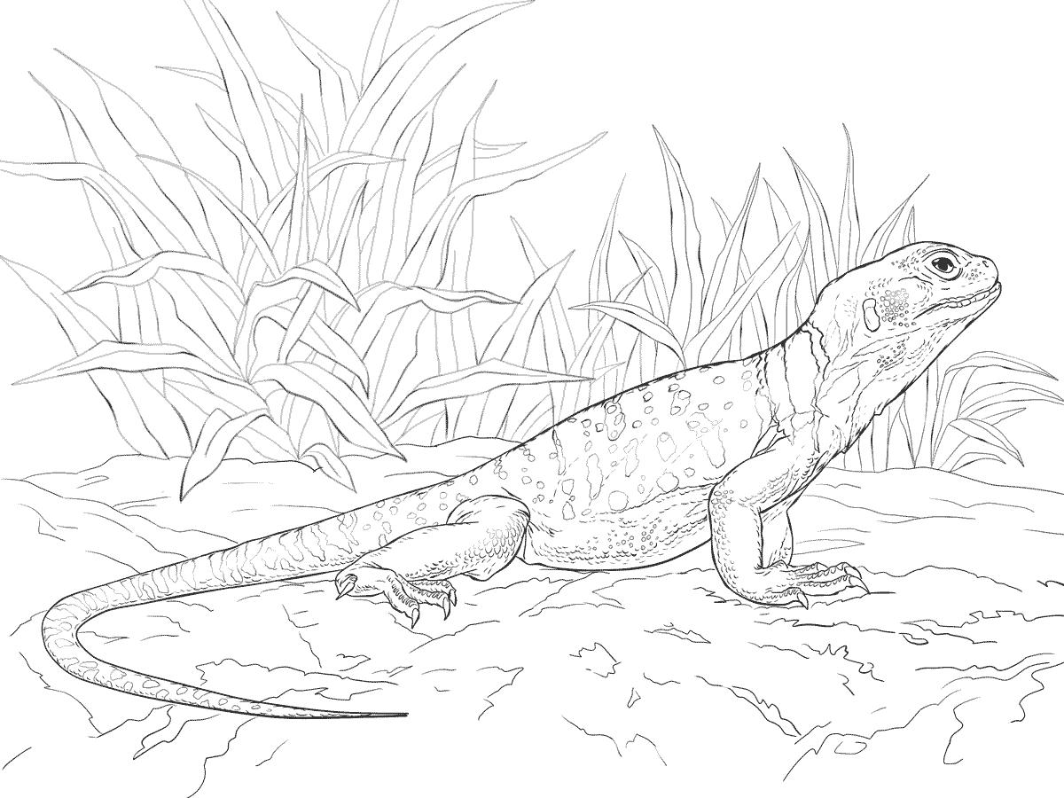 обед игуана картинка для рисования выдерживает только