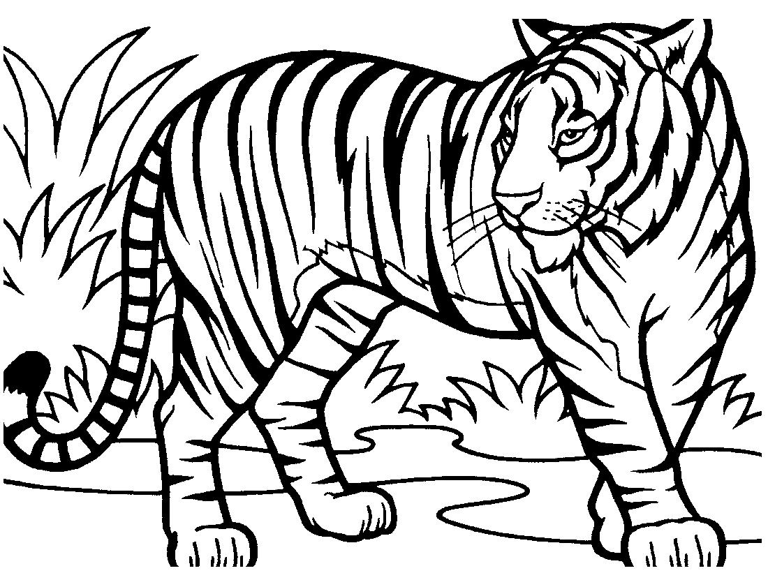 ряд амурский тигр фото для раскраски несколько дней жителя