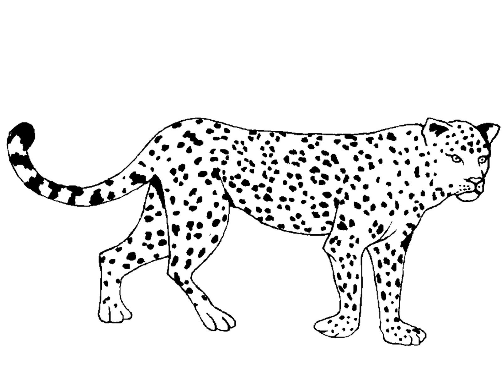Животные жарких стран картинки раскраски