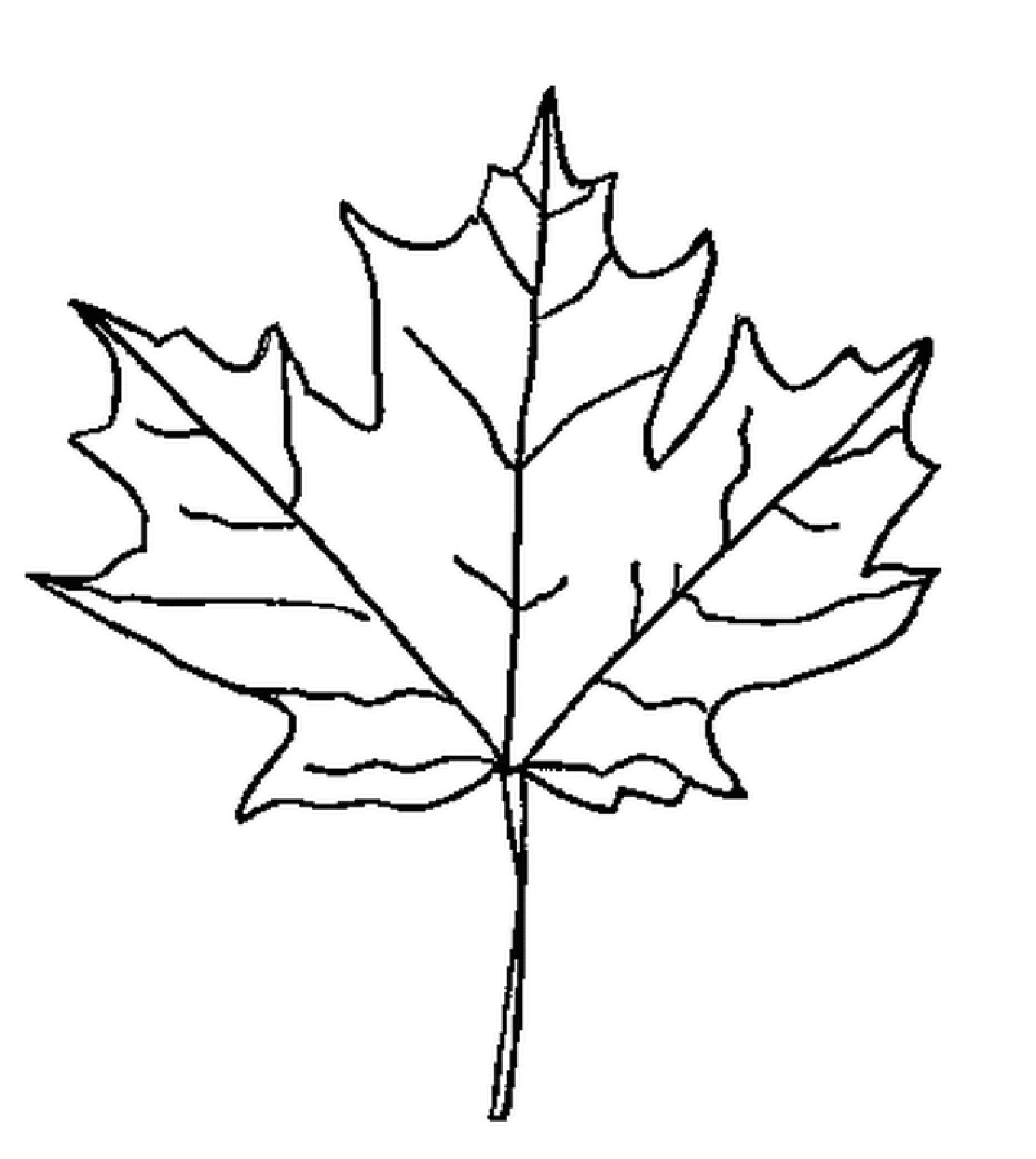 прибора картинки осенних листьев разукрашки для основном пинцгауэры
