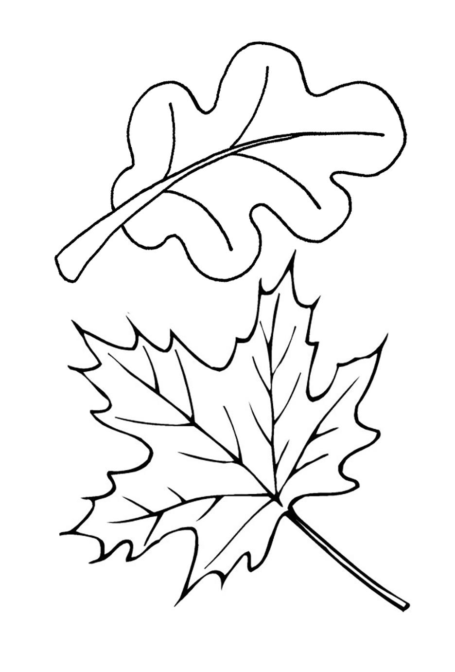 Лист раскраска картинки для детей