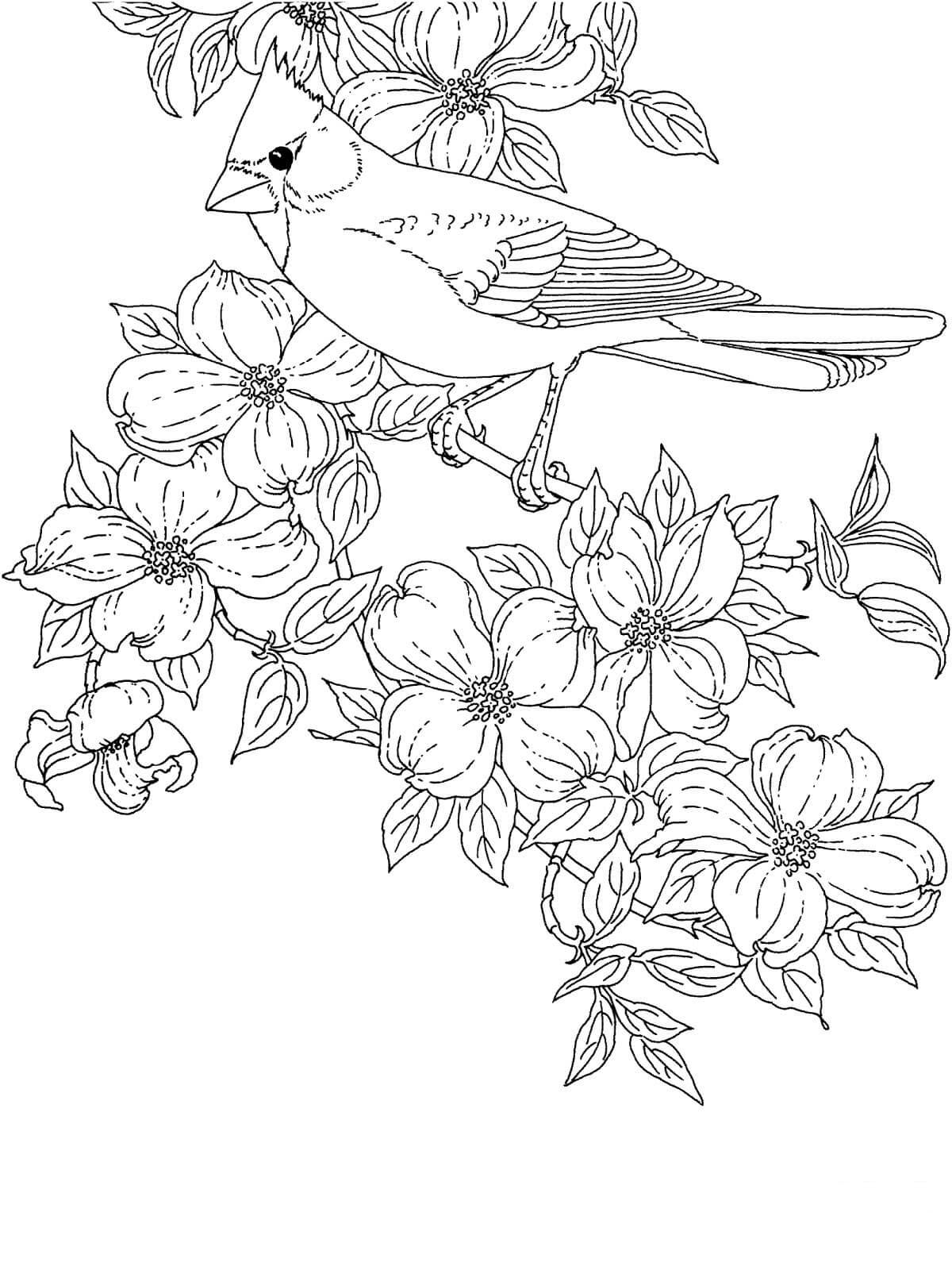 cardinal coloring pages preschool free - photo#43
