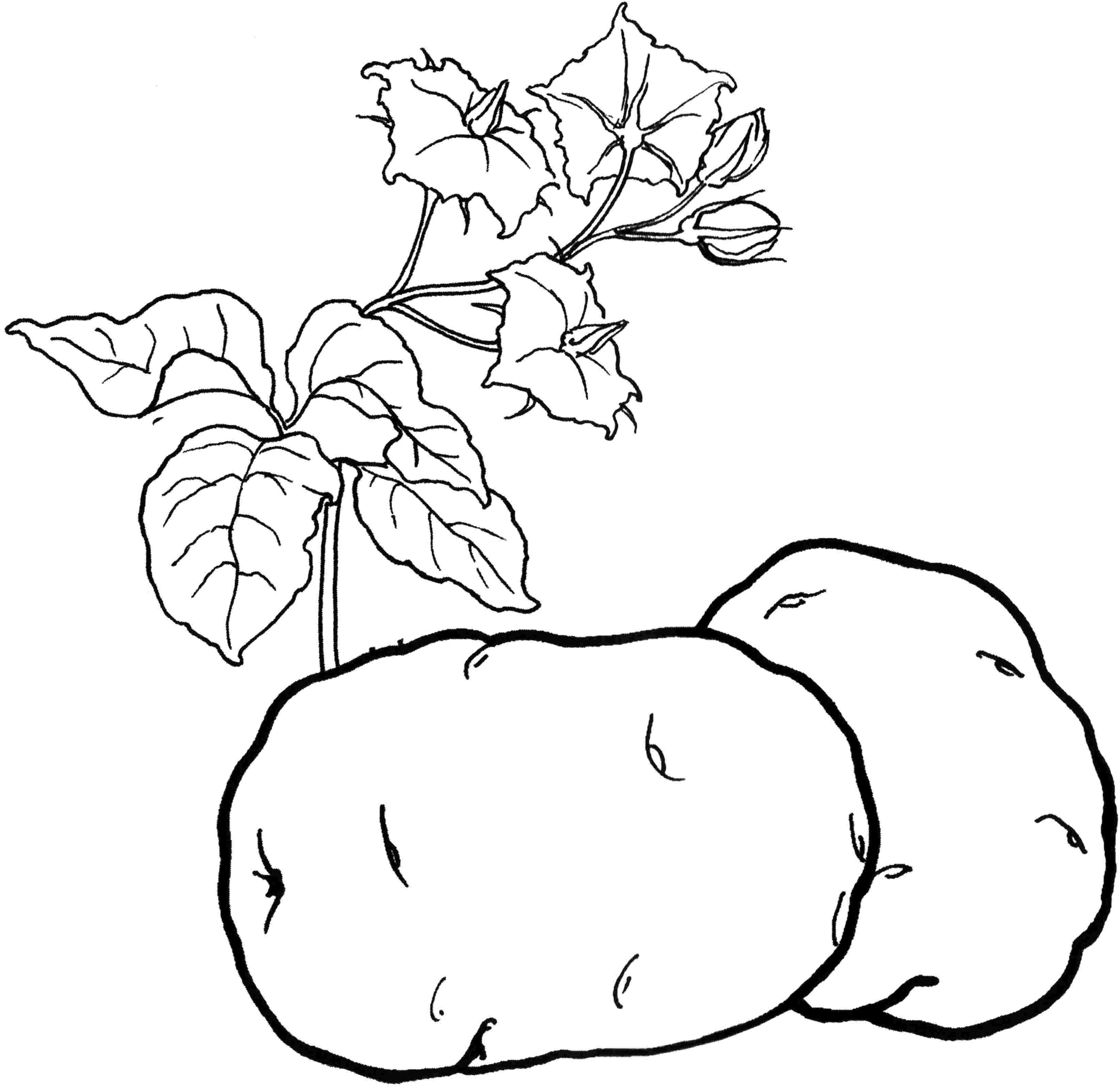 Раскраски Овощи - детские раскраски распечатать бесплатно