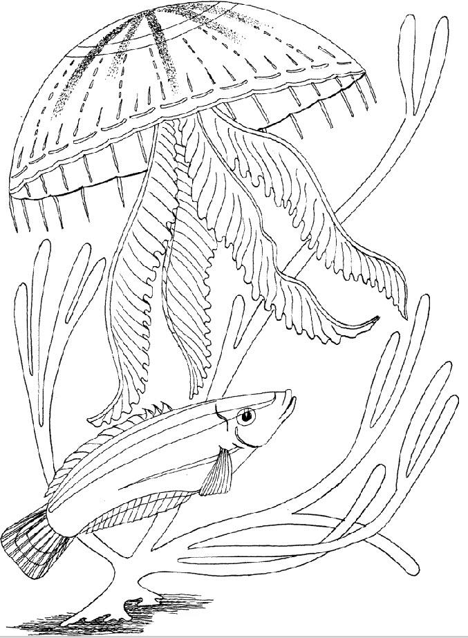 Картинки подводного мира нарисованные карандашом, рисунки карандашом прикольные