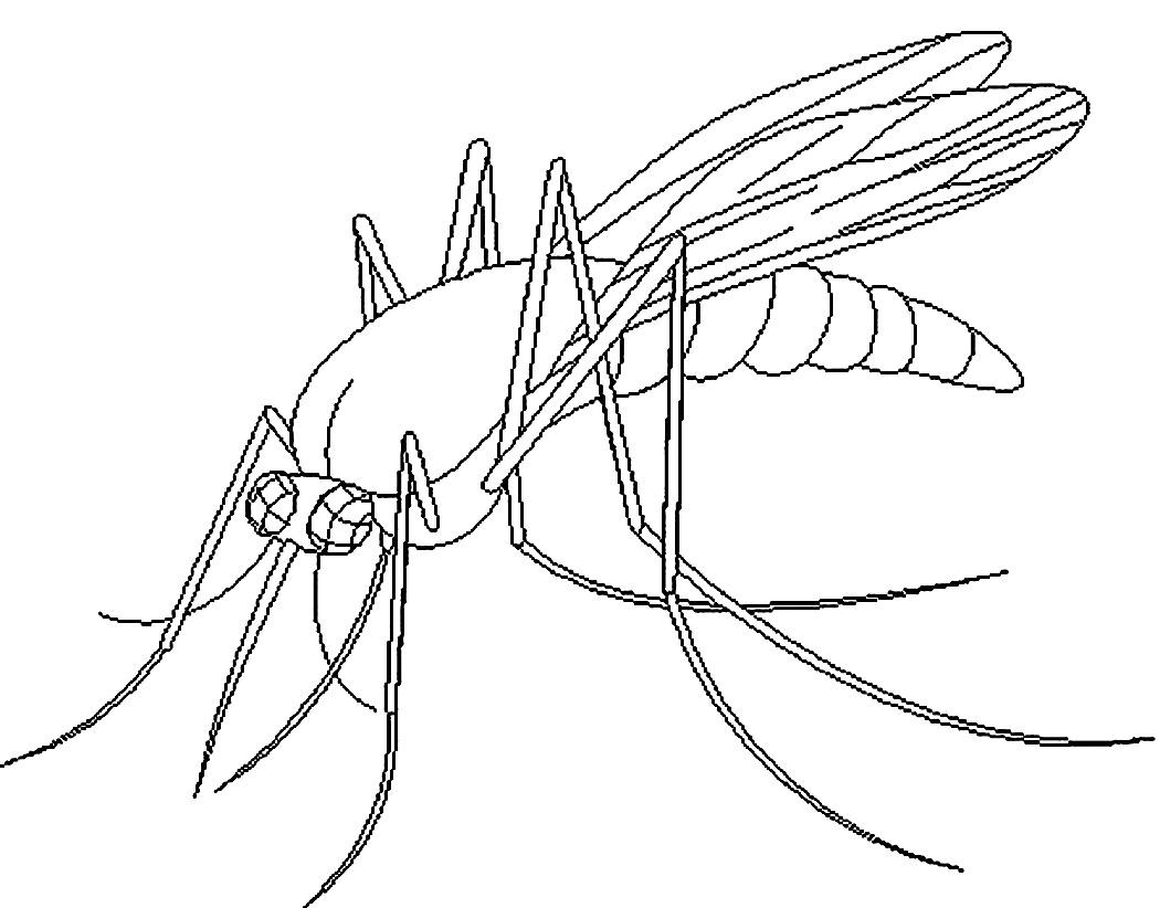 Рисунок комара карандашом для детей