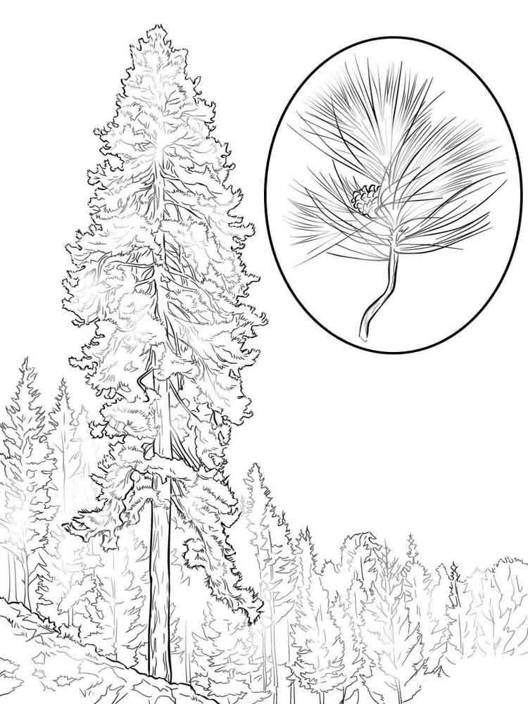 сложно поверить, картинки раскраски лесных деревьев шиша