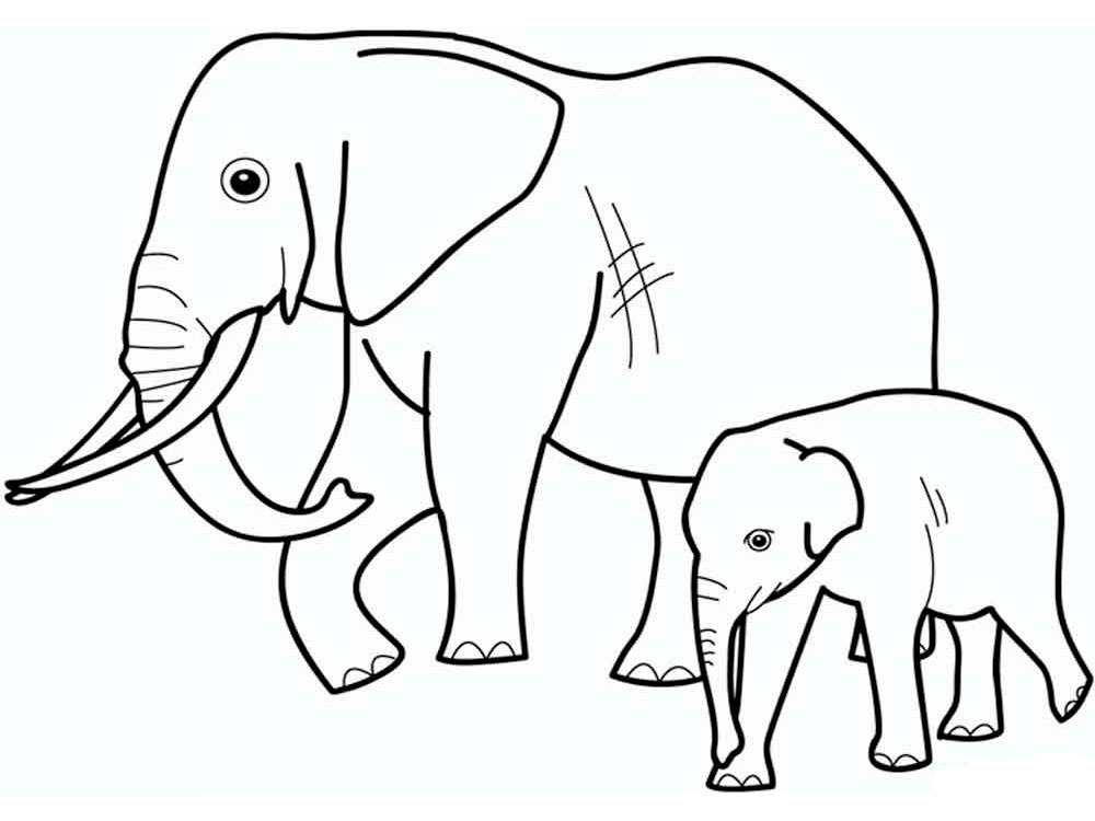 раскраска дикие животные детсские раскраски распечатать