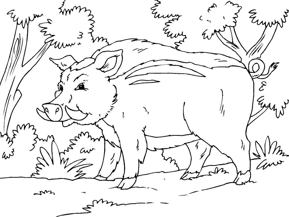 Картинка раскраска животный мир