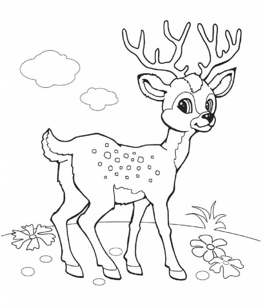 Раскраска Олень - детские раскраски распечатать бесплатно