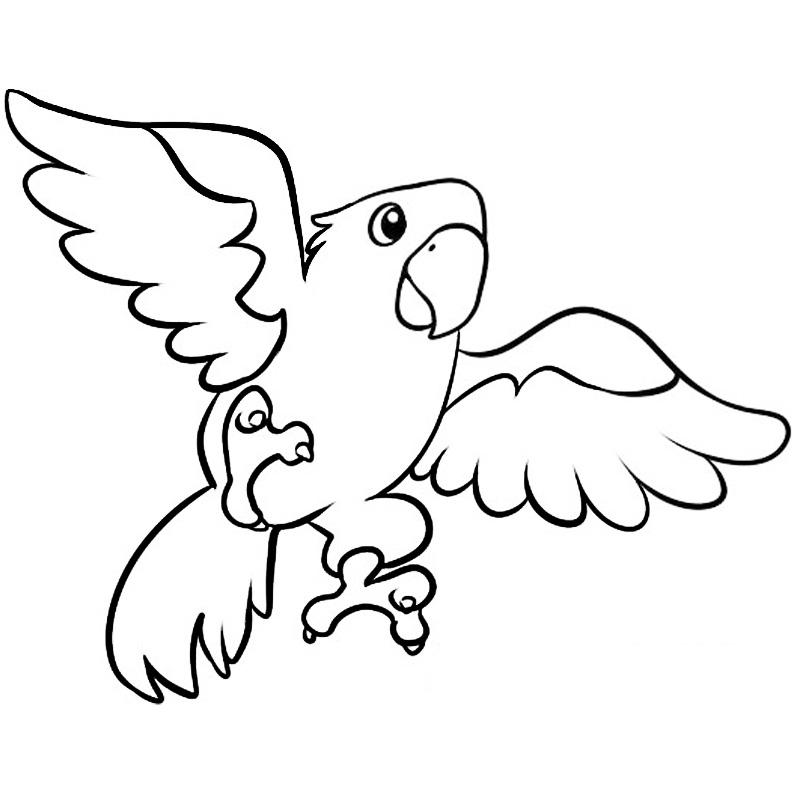 Раскраска Попугай  детские раскраски распечатать бесплатно