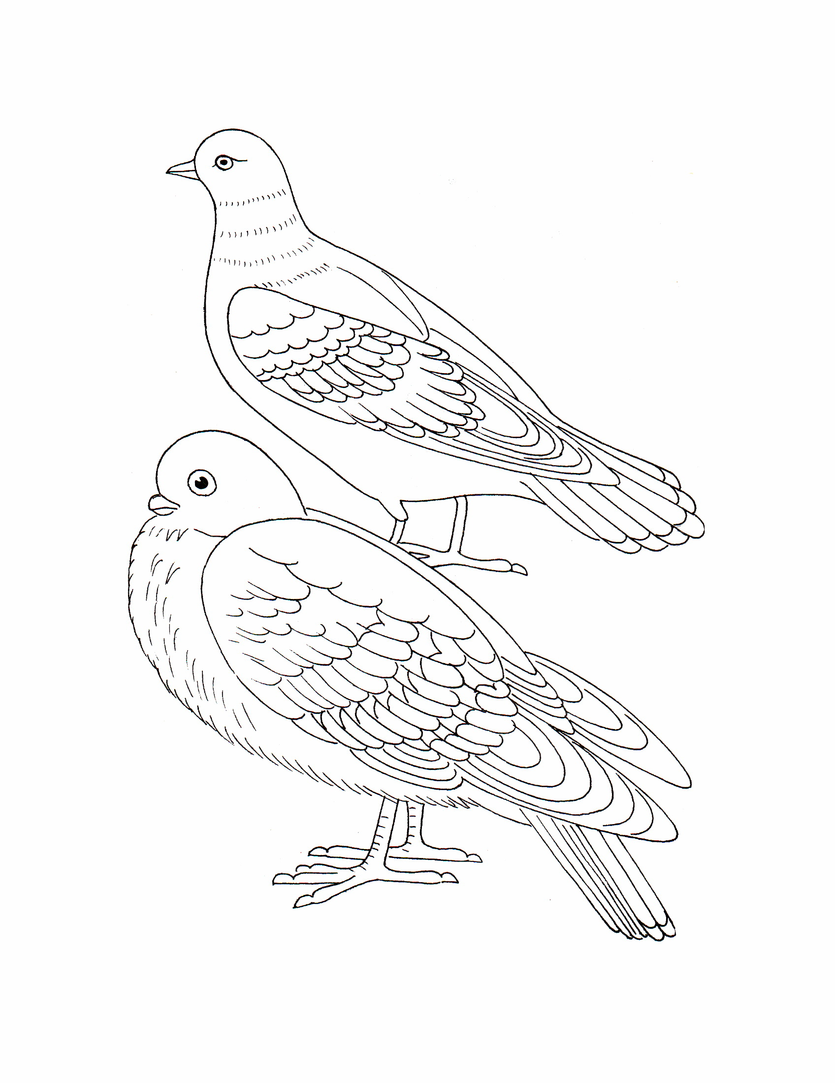 очень раскраски птицы печать спасителя появились уже