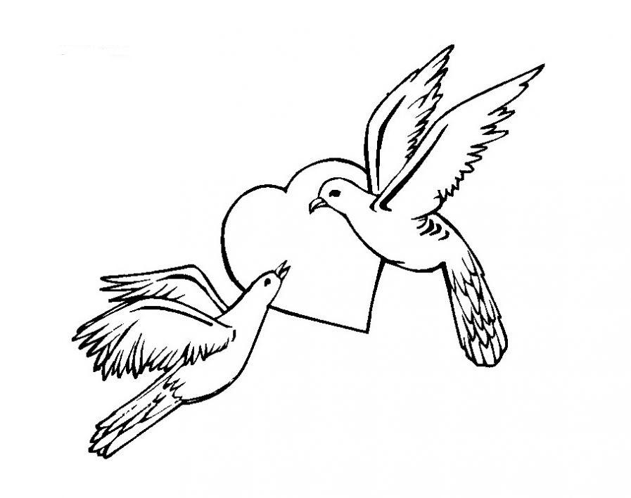 Скачать картинки голубей бесплатно