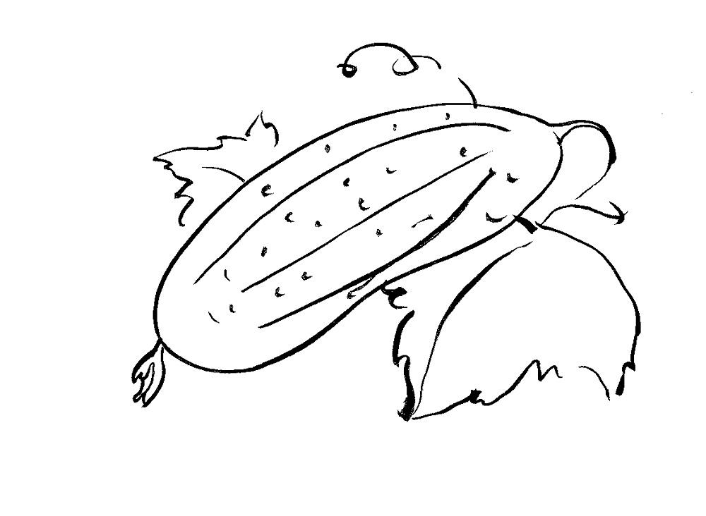 Раскраска огурцов