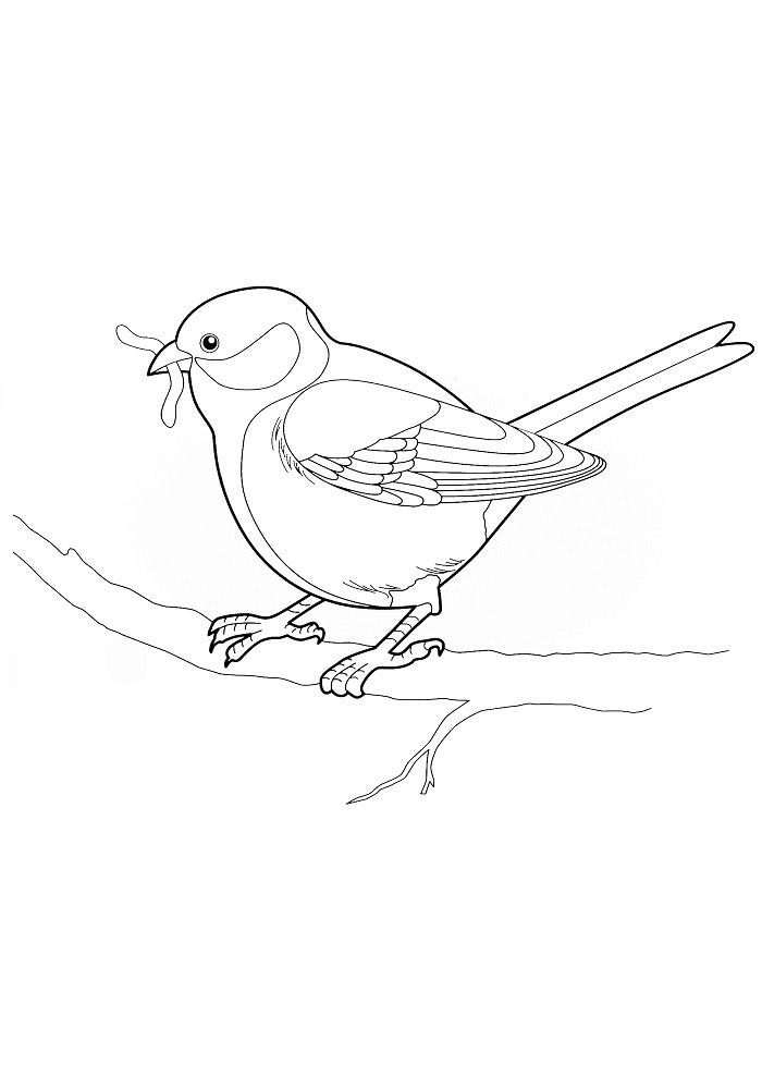 строительный распечатать раскраски зимующие птицы погоне