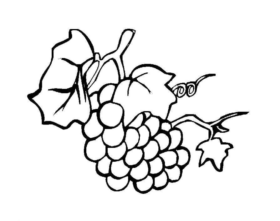Раскраска Виноград - детские раскраски распечатать бесплатно