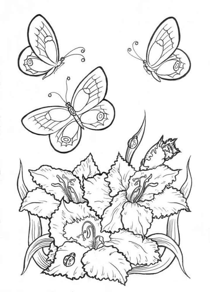 картинки раскраски бабочки и цветы