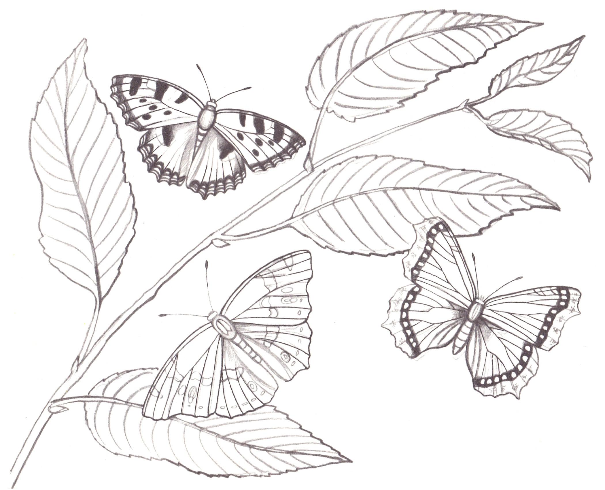 Открытки днем, картинки бабочка на цветке рисунок