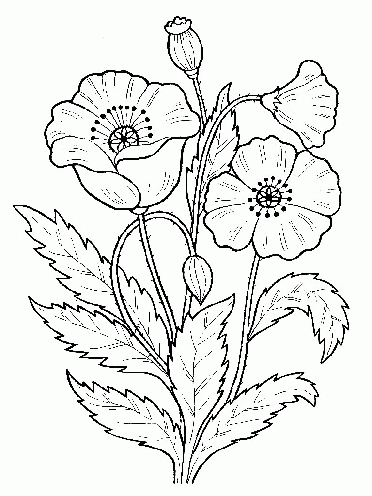 Раскраска а тему цветы
