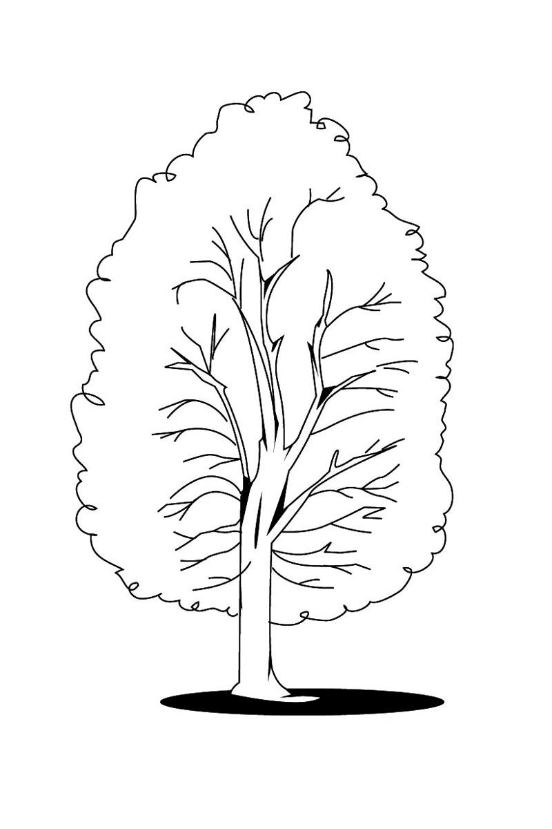 Деревья для раскраски фото