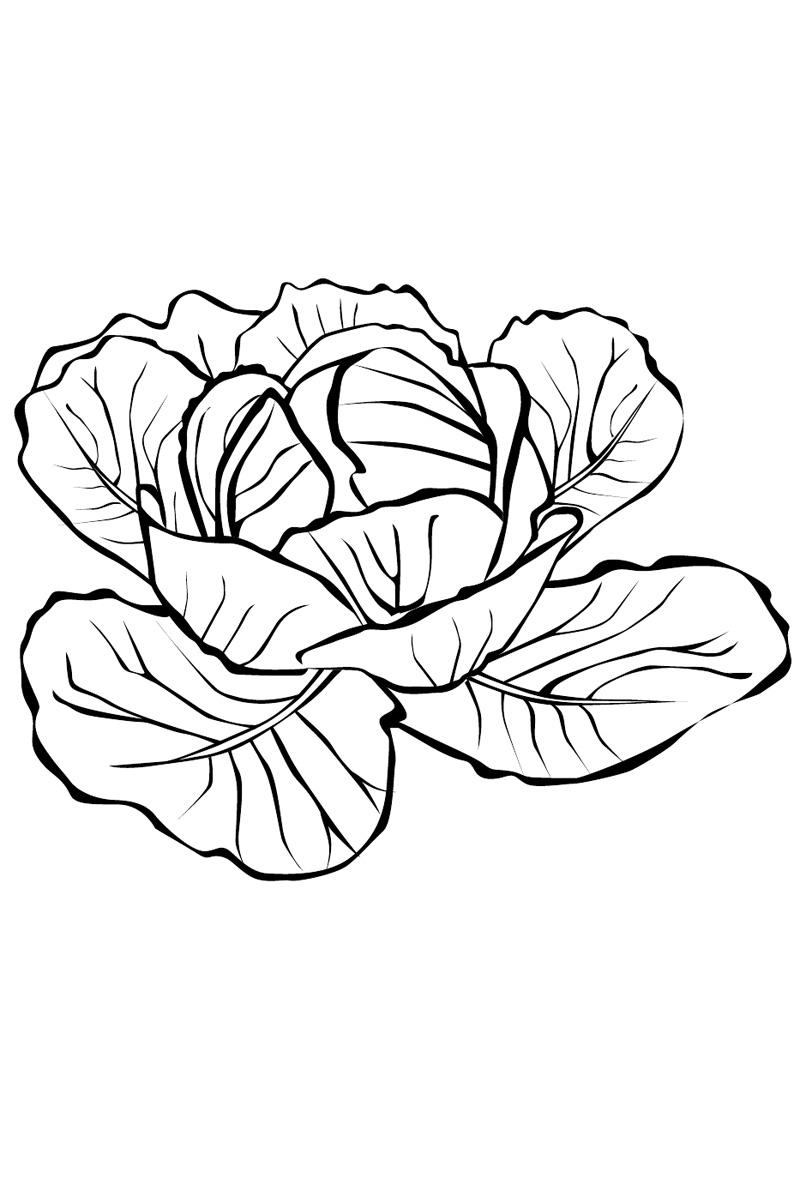 Рисунок цветная капуста