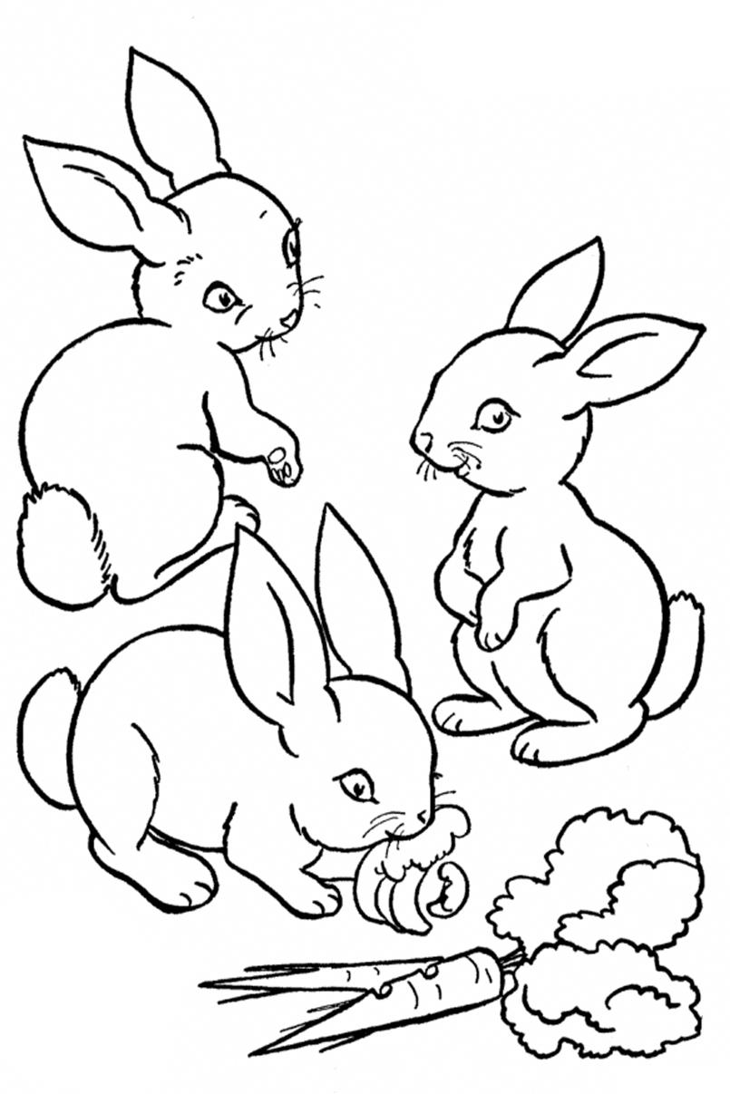 Раскраски Заяц - детские раскраски распечатать бесплатно