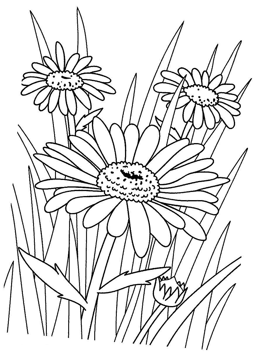 Раскраска Цветы на лугу - детские раскраски распечатать ...