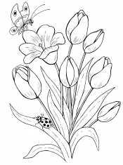 Бабочки и тюльпаны