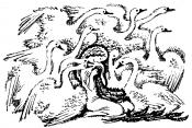 Дикие лебеди