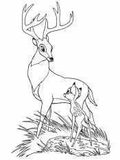 Олененок и олень