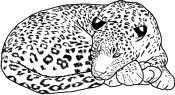Гепард спит